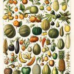 Образователни илюстрации за устойчиво хранене: арт работилница